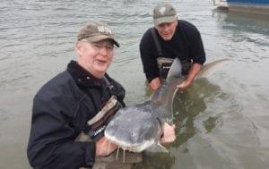 Fraser River Sturgeon Conservation